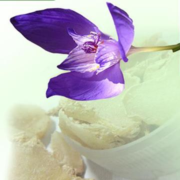 清风一号紫兰种植